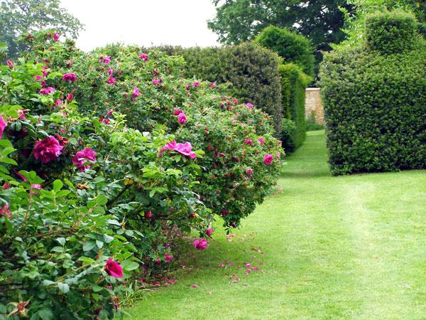 Chinese gardens bridge - Chastleton House Garden