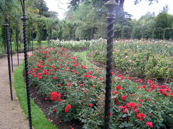 Rose Garden at Blenheim Palace