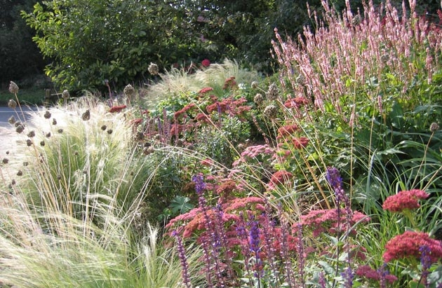 Persicaria, Alice Bowe English Landscape Garden Design