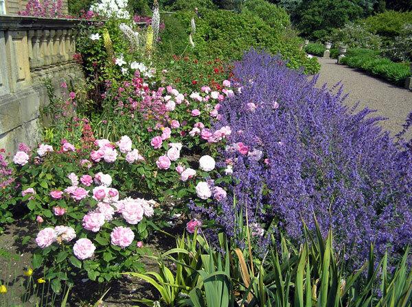 South Facing Border, Howick Hall Gardens