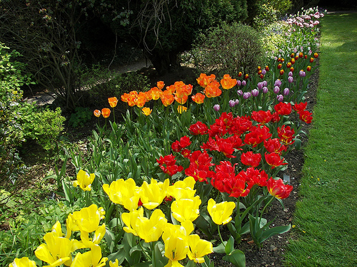 Tulips, Constable Burton Hall Garden