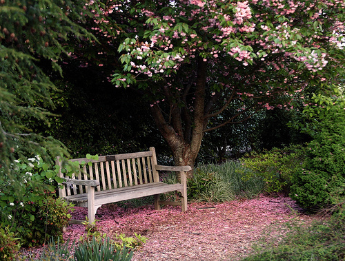 Lexington Arboretum, Bench