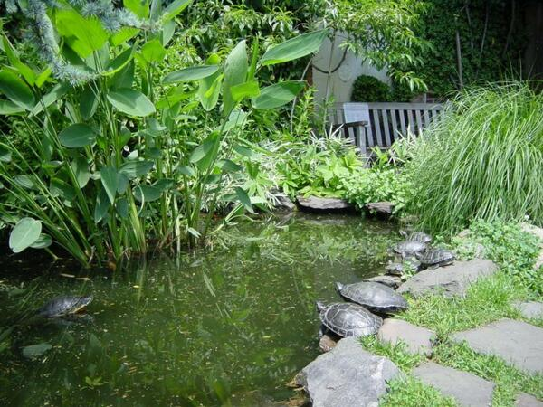 Pond in Liz Christy Garden