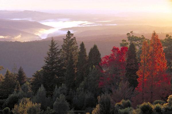Mount Tomah Botanic Garden, Australia