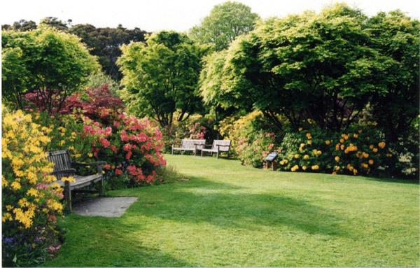 Azalea Garden, Dunedin Botanic Garden