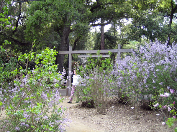 Lilac Garden in March, Descanso Gardens