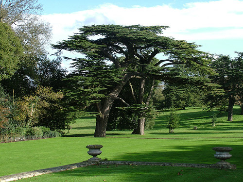 Kingston Lacy, Dorset