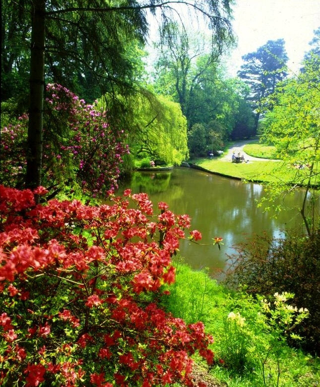 Image result for clyne gardens