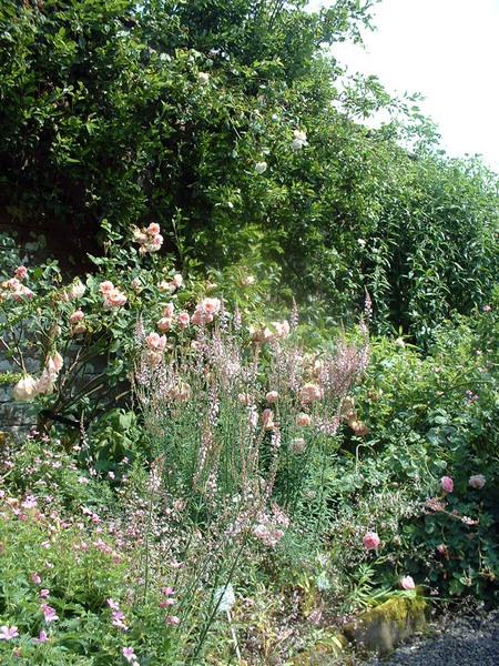 Dalemain Garden, England