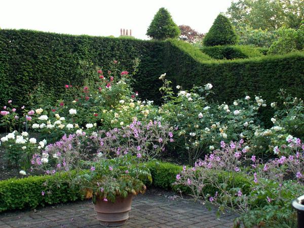 Rose Garden, Fenton House Garden