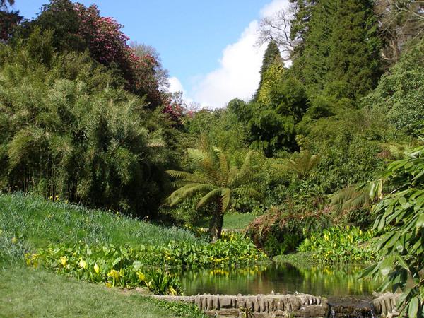 Trebah Garden, England