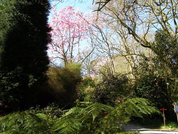 Caerhays Castle Garden, England