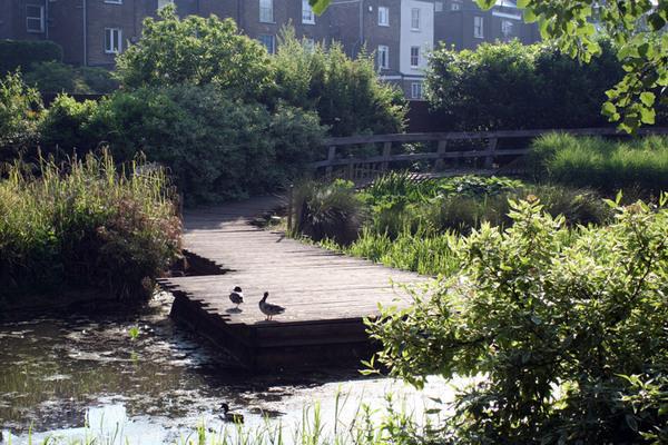 Wildlife Garden, Meanwhile Gardens