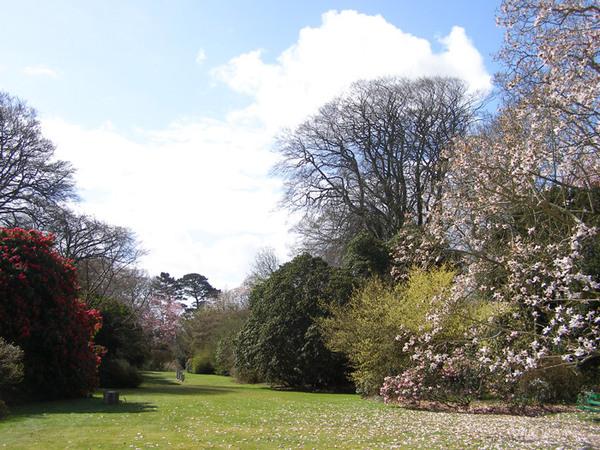 Trewithen Gardens, England
