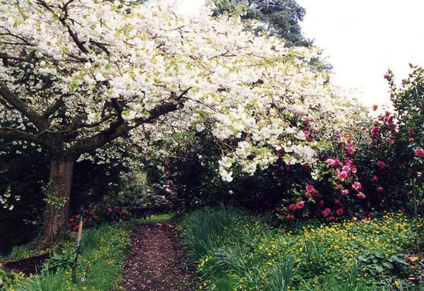 Broadleas Garden, England