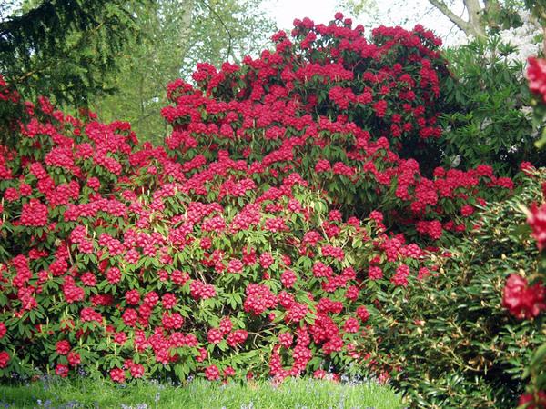 Bowood Gardens, Wiltshire