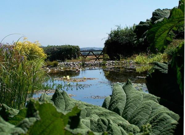 Pond, Ken-Caro Gardens