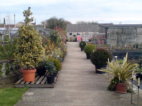 Shrubs at Downside Nurseries