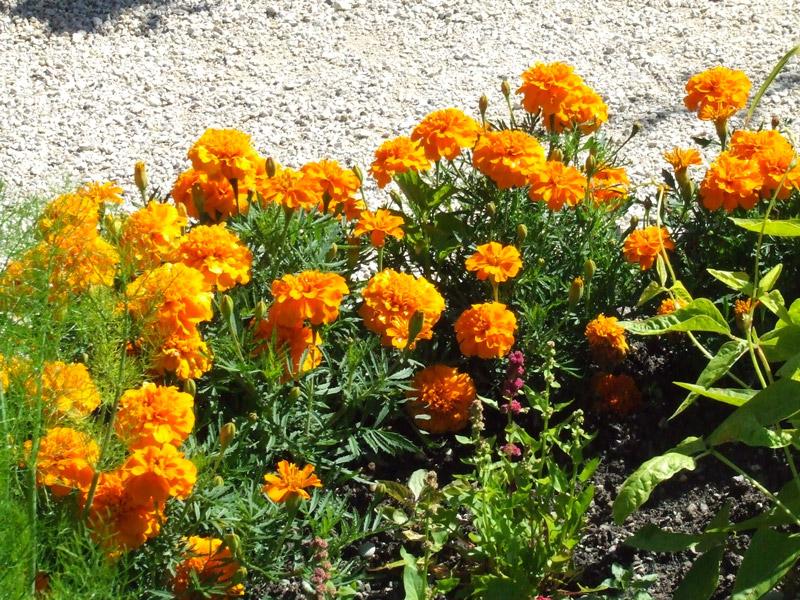 Le labyrinthe jardin des cinq sens for Jardin 5 sens guadeloupe