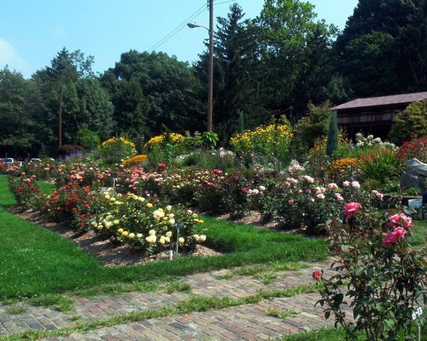 Rose Garden, Renziehausen Park