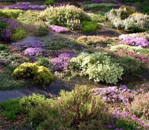 Thymus, LW Plants