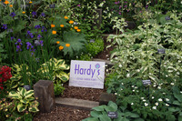 Medium hardys cottage garden plants original