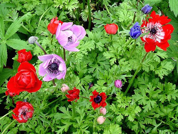 Kitchen Garden, Tyntesfield Garden