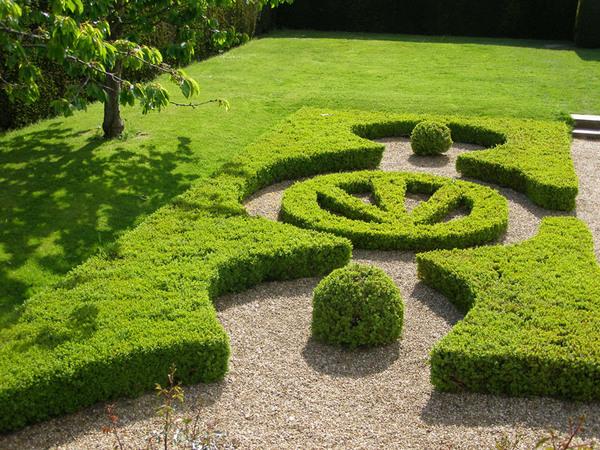 Hedges, Penshurst Place Garden