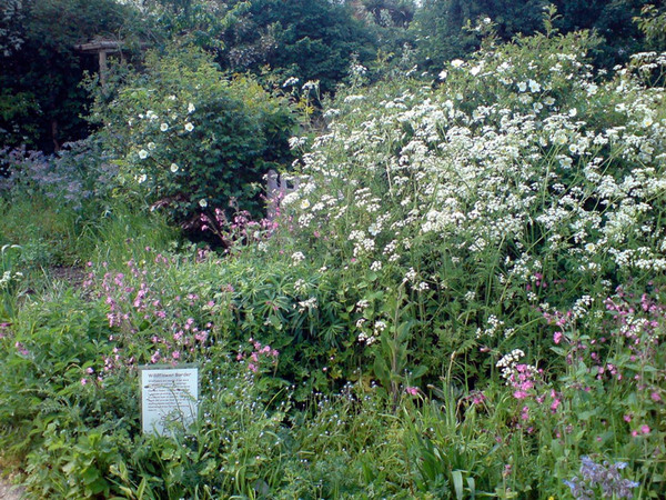 Wildlife Border, Centre for Wildlife Gardening