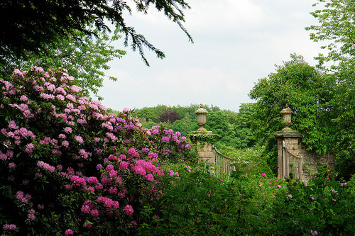 Sizergh Castle Garden in June