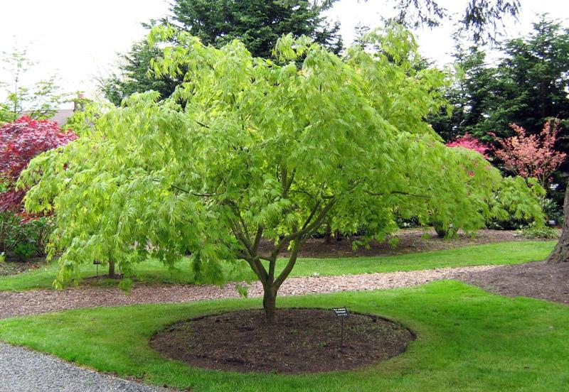 evergreen arboretum gardens