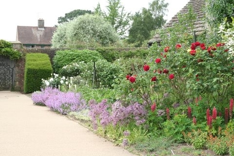 Rose, Wakehurst Place Garden