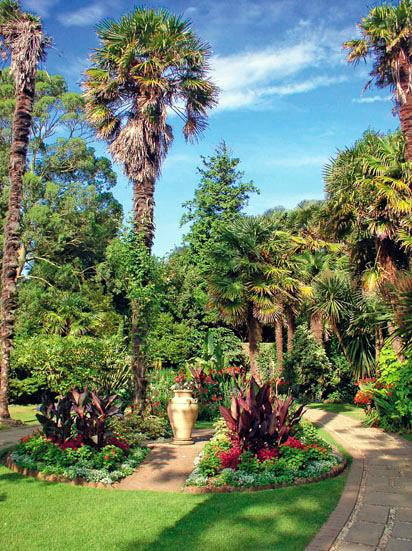 Palms, Abbotsbury Subtropical Gardens
