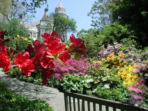 Rhododendron, Casa Loma Gardens