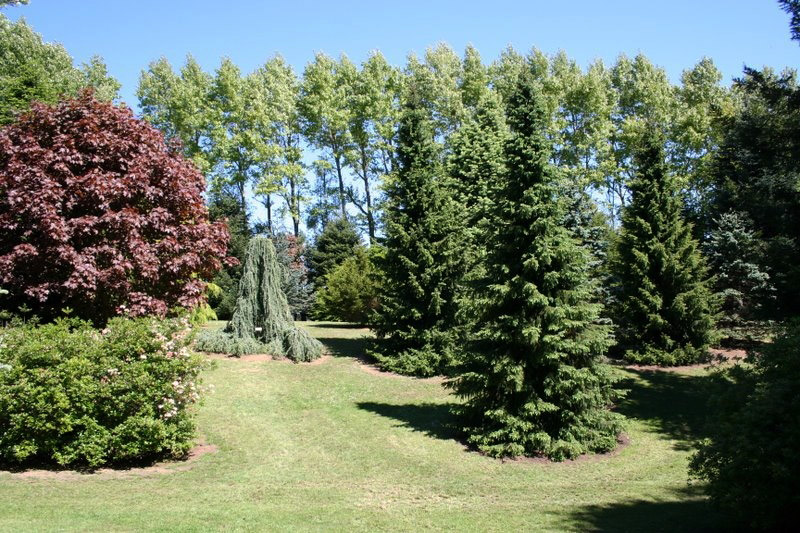 Conifer Garden, Cross Hills Garden