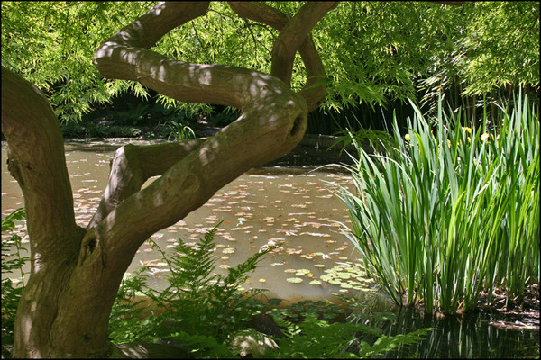 Pond, Humes Japanese Stoll Garden