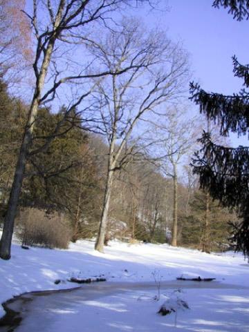 Leonard J Buck Garden, Winter