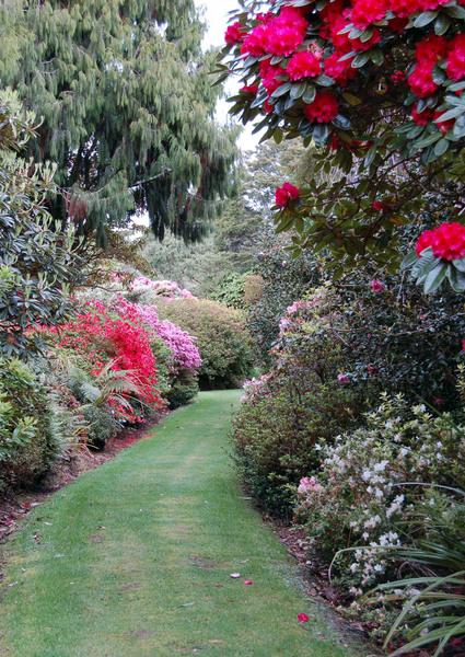 Pukeiti Rhododendron Trust, New Zealand
