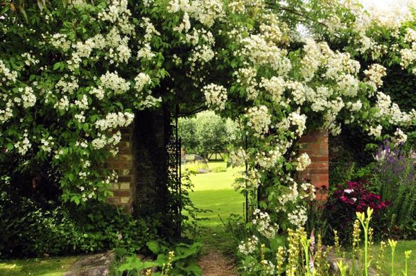 Finchcocks Garden, Kent