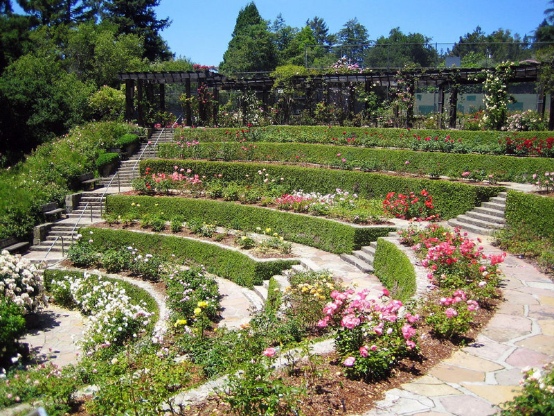 Berkeley Rose Garden, California