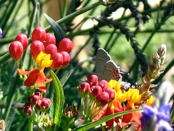 Mildred E Mathias Botanical Gardens, California