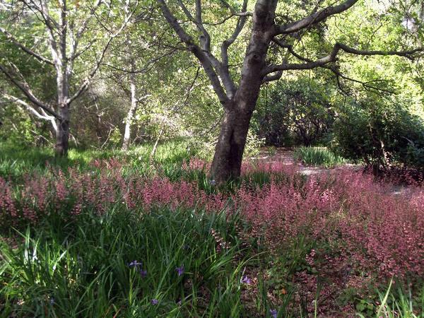 Rancho Santa Ana Botanic Garden, California