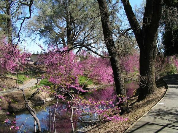 Davis Arboretum, California
