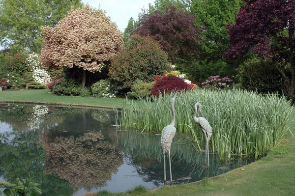 Pond, Trott's Garden