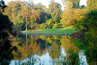 Medium melbourne botanic garden original