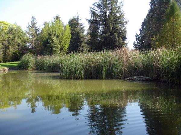 Fullerton Arboretum Garden