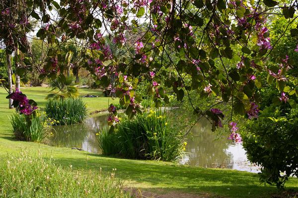 Pond, Fullerton Arboretum Garden