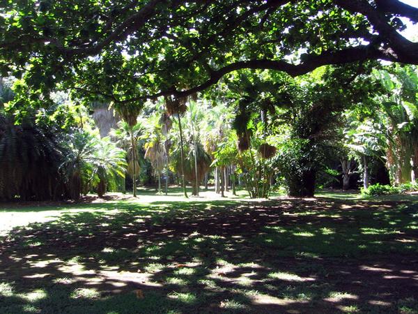 Foster botanical garden for Foster botanical garden honolulu