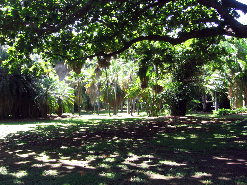 Ordinaire Foster Botanical Garden, Hawaii