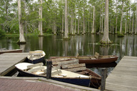 Medium cypress gardens south carolina original